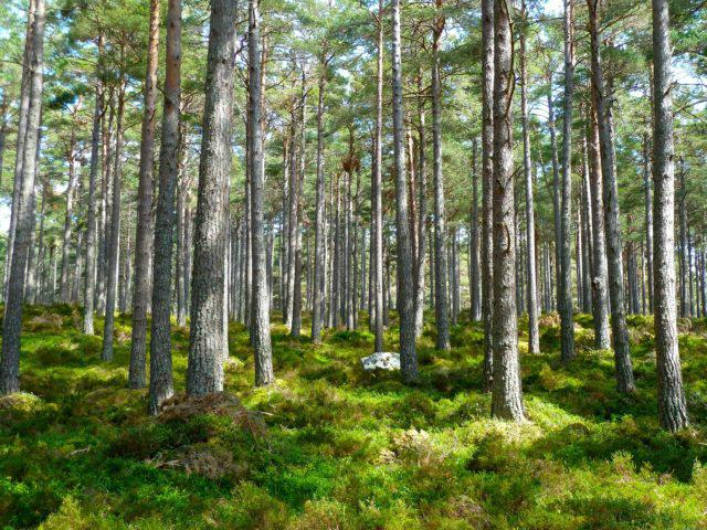 forest-272595_1920-640x480-1