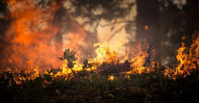 forest-fire-2268729_1280-640x332-2